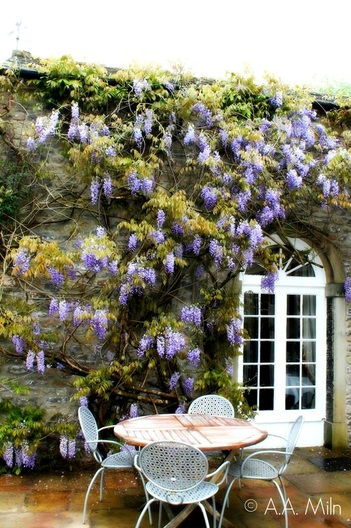 Hipping Hall Hotel wisteria
